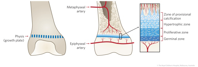 figure10_anatomy
