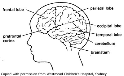 How the brain works RCH KHI