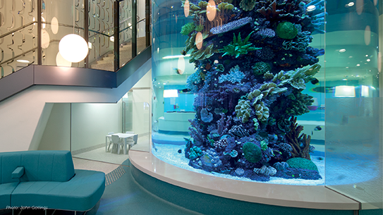 Picture of the RCH aquarium.